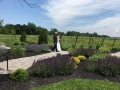 Father walks Bride through the Vineyards