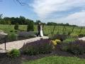 Father walks Bride through the Vineyards