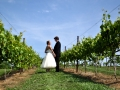 Wedding Couple in Vineyard