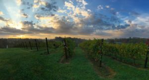 vineyardsunrise